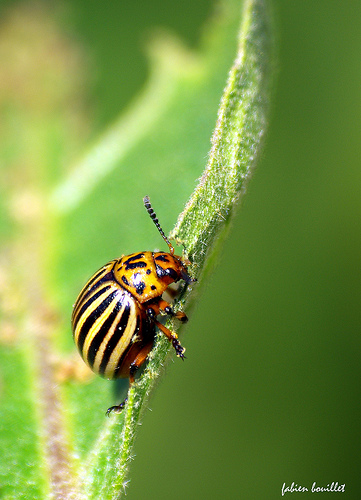 boite a insecte