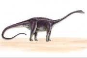 Diplodocus.jpg