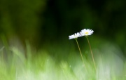 Blomma-9721.jpg