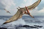 Pteranodon-388487.jpg