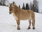 Horse-2735475 640.jpg