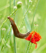 plante carnivore wikimini