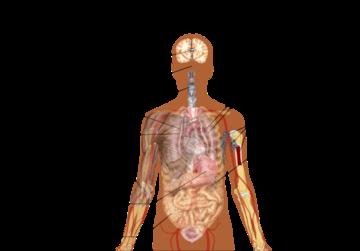 Symptoms of coronavirus disease 2019.png