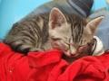 Un chat dans son panier-2828.jpg