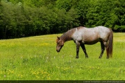 A horse in the meadow-2697.jpg