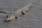 Croc-897.jpg