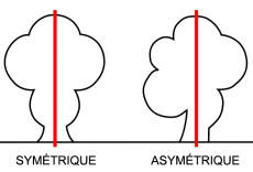 Symétrie et asymétrie