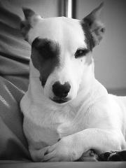 Le beau chien-8440.jpg