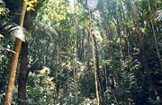 La forêt tropicale.jpg