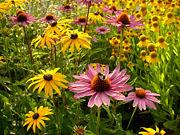 Fleurs jaunes et roses-2716.jpg