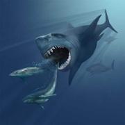 Megalodon-megalodon.jpg