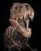 Tyrannosaure-squelette.jpg