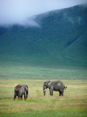 Elephants in Ngorongoro Crater-1284.jpg