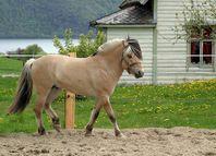 Fjord cheval-1531.jpg