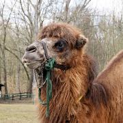 Kamel-3471.jpg