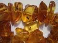 Insectes dans résine fossilisée (ambre).jpg