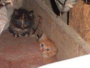 Les deux petit chatons-9124.jpg