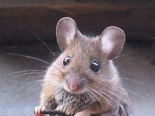 Le repas préféré du hibou! miam miam!