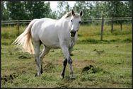 Cheval blanc ou Cheval gris?-2575.jpg