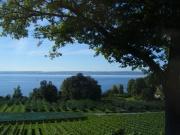 Lac de Constance.jpg