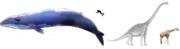 Baleine bleue-brachiosaure-girafe-homme.png