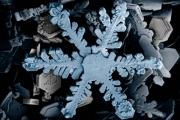 Cristal de glace dans flocon de neige-Microscope électronique.jpg