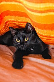 Chat noir-3980.jpg