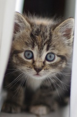 Fichier:Le chaton peut se fofiller departout !!-1497.jpg
