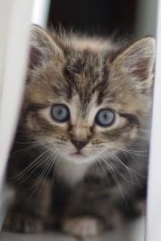Le chaton peut se fofiller departout!!-1497.jpg