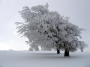 Paysage hivernal.jpg