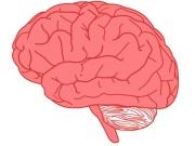 Pink brain.JPG