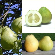Owoce Pomelo.jpg