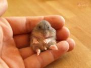 Bébé hamster-4840.jpg