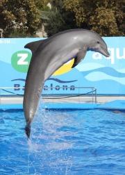 Un dauphin sautant de l'eau