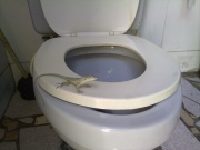 Gecko Gekko toilettes-7182.jpg