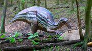 Maiasaura, DinoPark Košice.jpg