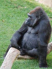 Gorille-9632.jpg