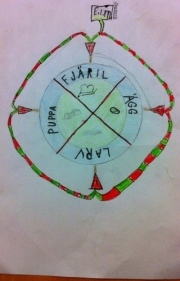 Fjärilenslivscykel.jpg