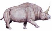 Elasmotherium.jpg