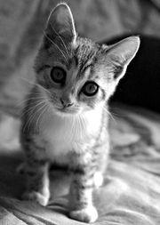 Cat -1060.jpg