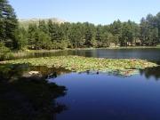 Lac de Mangano.JPG