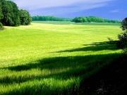 Nature-4000.jpg