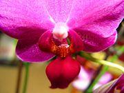 Orchidée2-7217.jpg