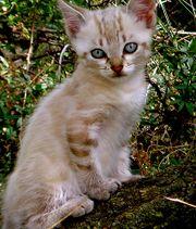 Petit chat-8488.jpg