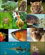 Animal-animaux-espèces-especes.jpg