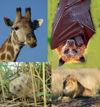 Quatre exemples de mammifères